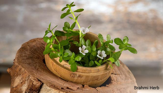 6  excellent ayurvedic herbs to boost memory and brain function in kids